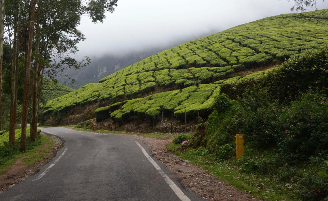 Munnar Travel Guide