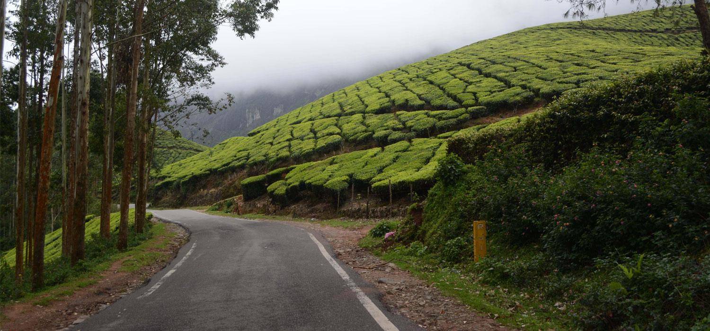 Munnar Travel Guide
